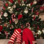 Albero di Natale - Torrisi