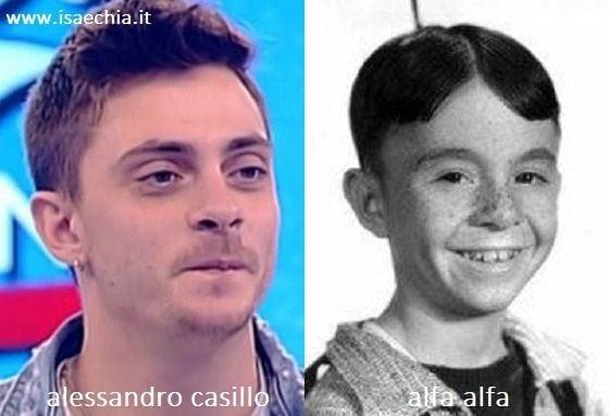 Somiglianza tra Alessandro Casillo e Alfa Alfa