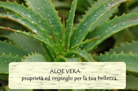 Aloe vera: proprietà ed impieghi