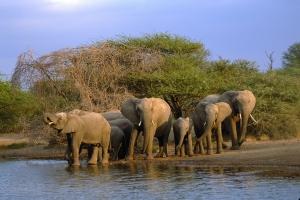 kruger-elephants