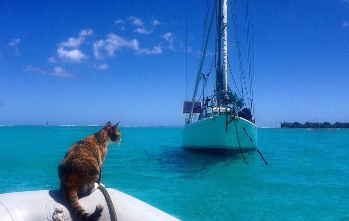 sailing-cat-travelling-world-liz-clark-1-700x445