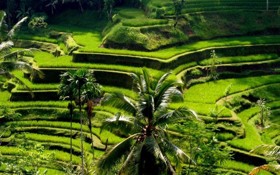 Viaggio in Indonesia 9-21 Giugno