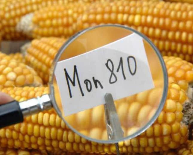 Немецкие НПО проиграли Monsanto битву за ГМО сою в верховном европейском суде