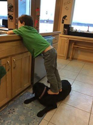 Il cane e il figlio di Sarah Palin 1