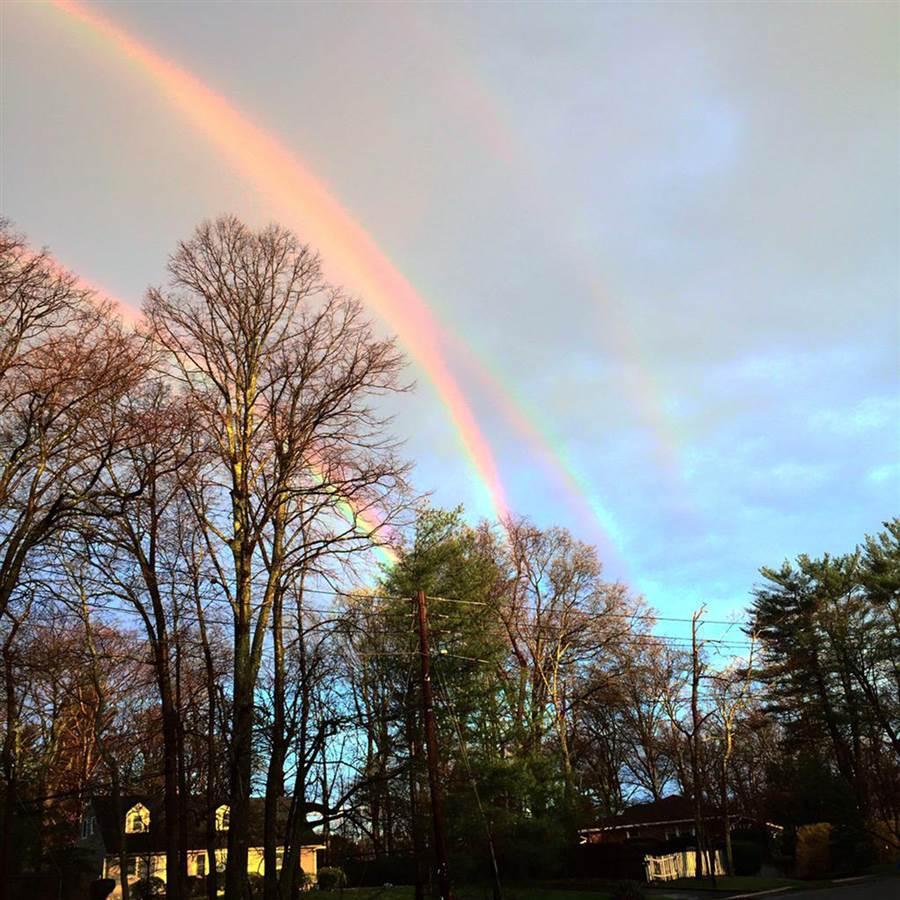 quattro arcobaleni amanda curtis