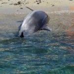 delfino ucciso capo carbonara 5