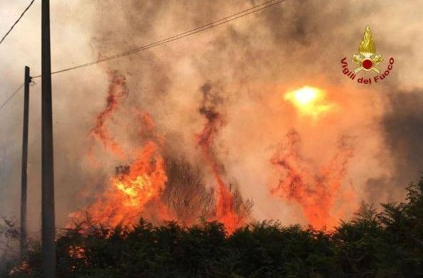 gatti benzina vesuvio incendi animali vivi - 4