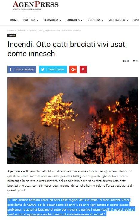 gatti bruciati vesuvio lorenzo croce