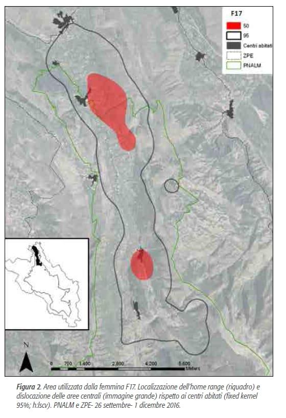 orsa amarena parco nazionale abruzzo orso marsicano - 2