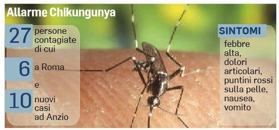 chikungunya zanzara epidemia