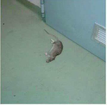 topo morto san camillo