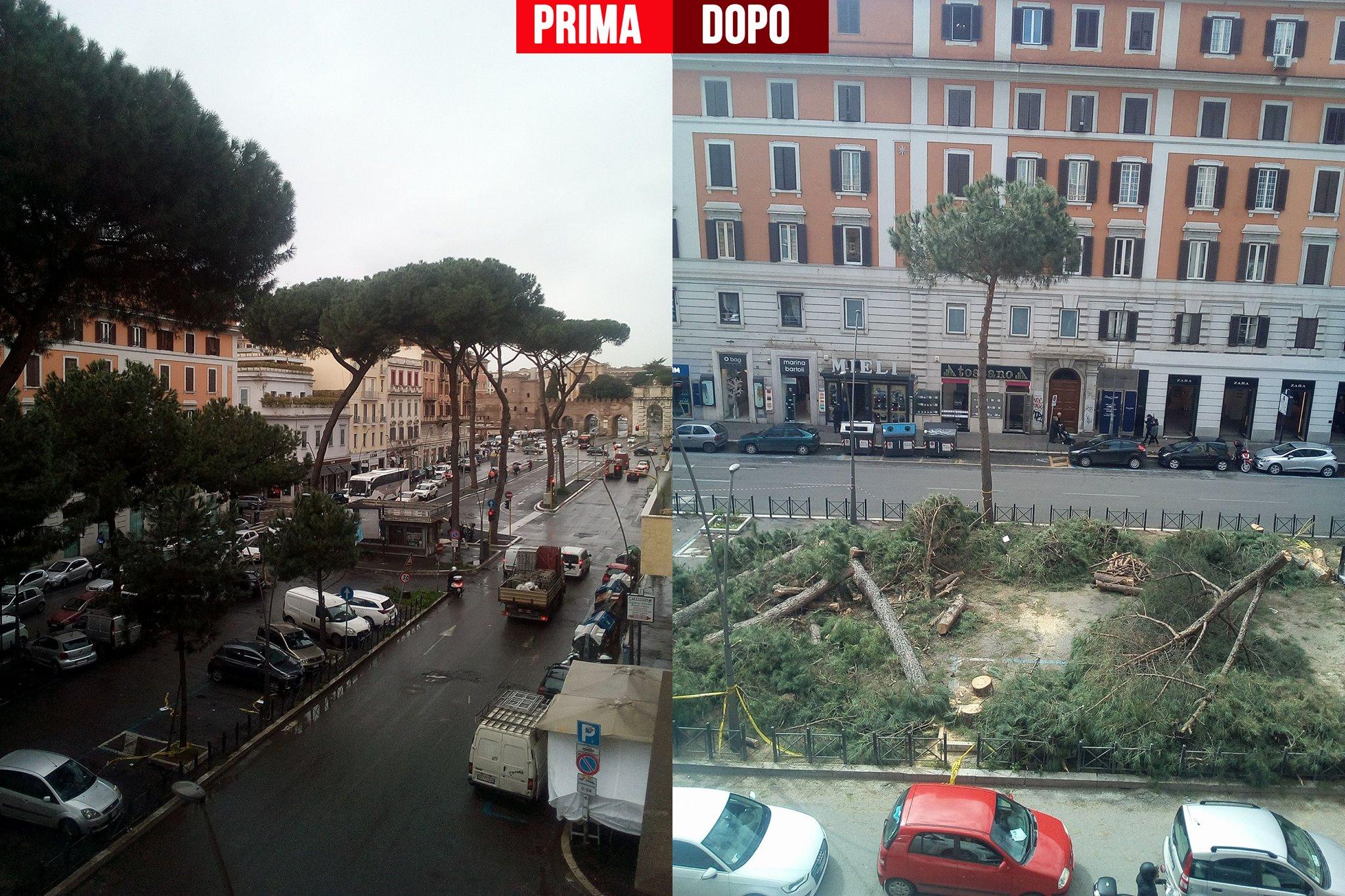 daniele diaco m5s roma capitozzatura alberi - 9