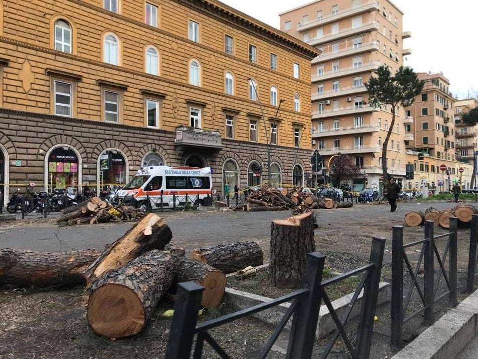 pini tagliati roma m5s via appia nuova - 1