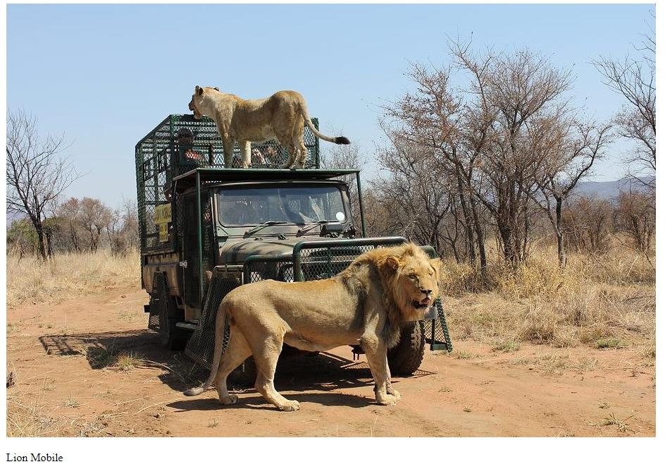 shamba mike hodges leone ucciso sudafrica - 1