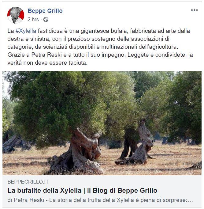 beppe grillo xylella
