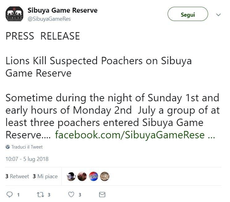 sibuya game reserve bracconieri leoni