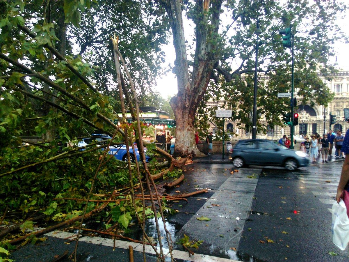 alberi pioggia roma