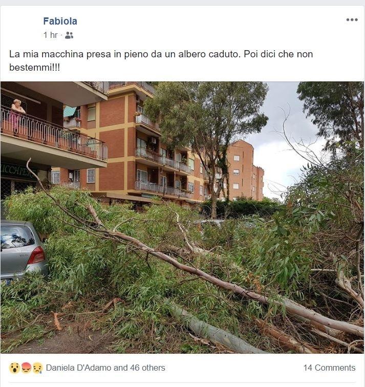 caduta alberi roma