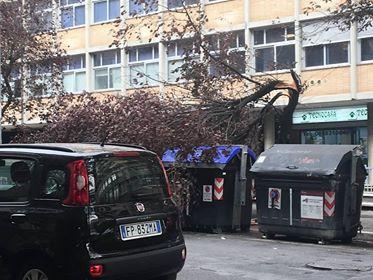 alberi caduti roma
