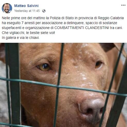 Violeta Senchiu salvini omicidio - 2
