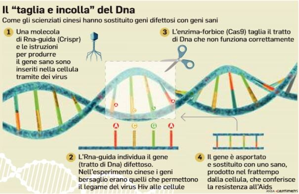 gemelline dna modificato