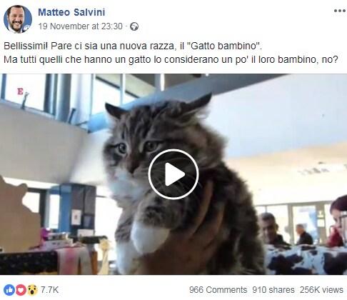 salvini gattini strategia - 2