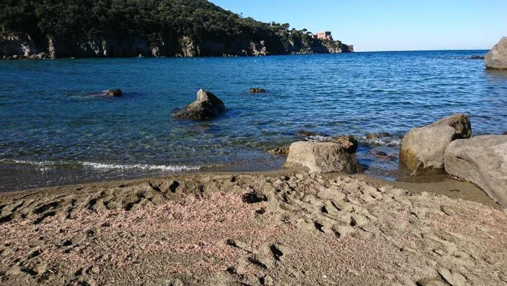 gamberetti spiaggiati ischia vulcano - 4