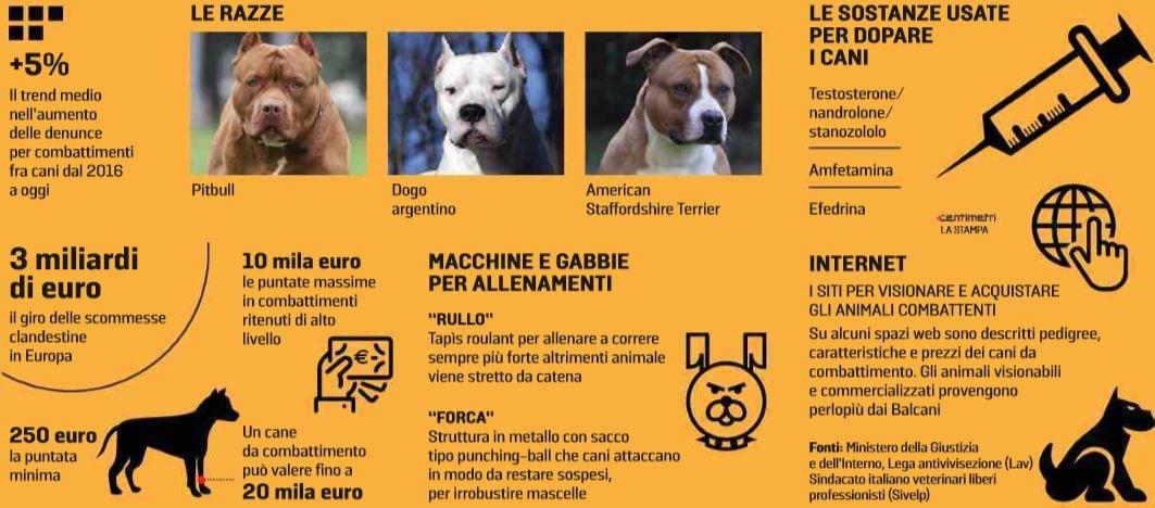lotta tra cani 1