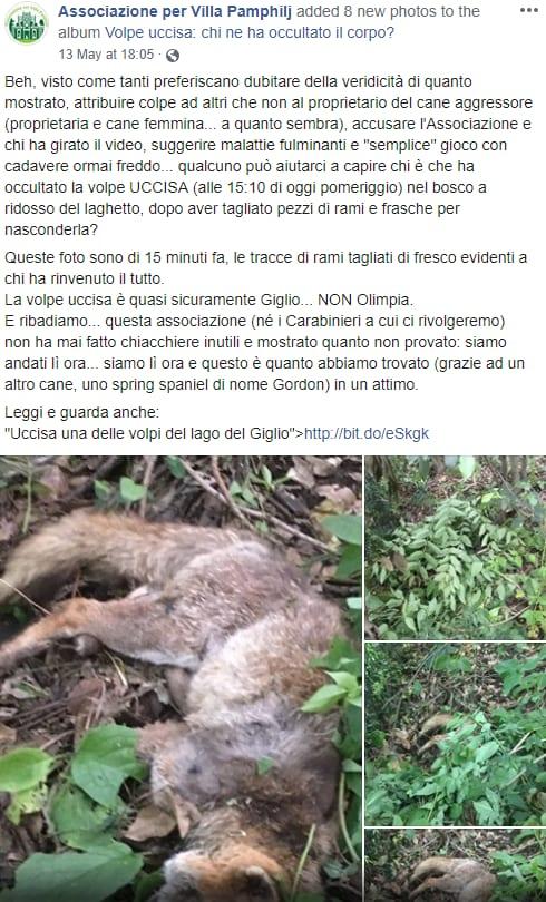 giglio volpe uccisa villa Pamphilj cane - 3