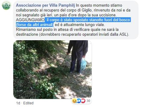 giglio volpe uccisa villa Pamphilj cane - 4