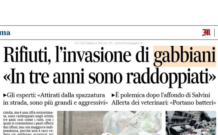 gabbiani roma 3