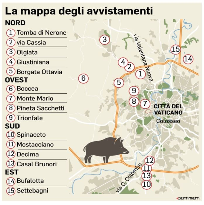 mappa cinghiali roma