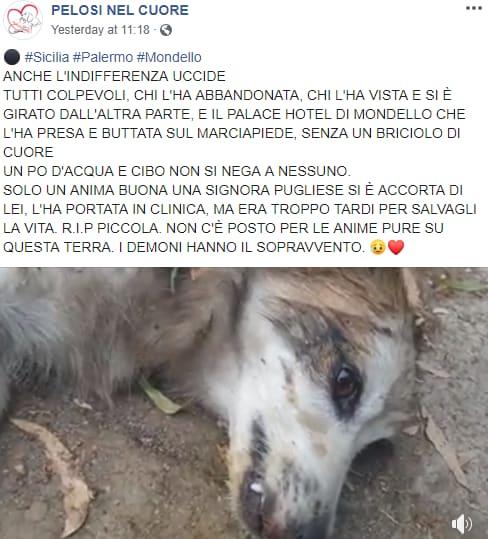 cane morto mondello hotel sicilia - 1