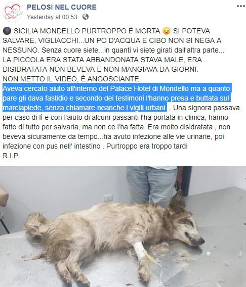 cane morto mondello hotel sicilia - 2