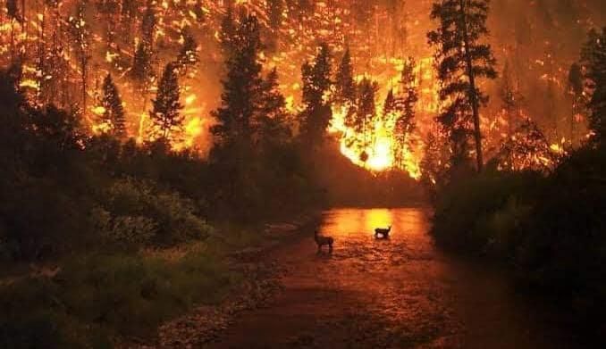 Siberia in fiamme - appello