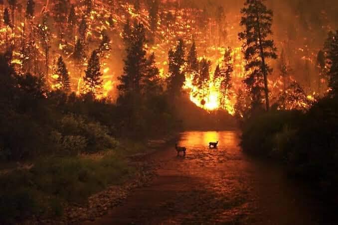 La Siberia in fiamme