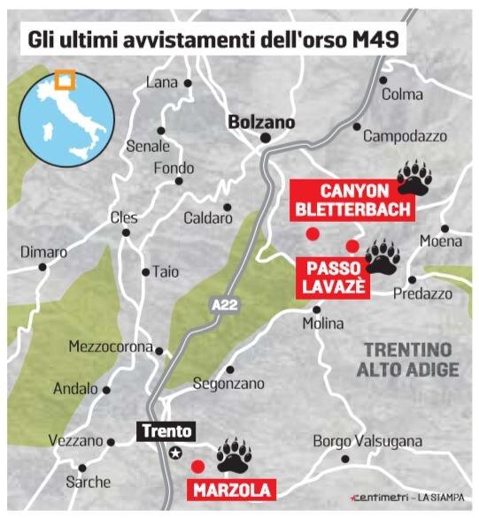 m49 avvistamenti