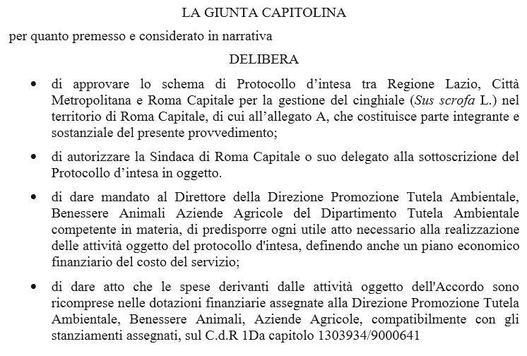 CINGHIALI ROMA 1