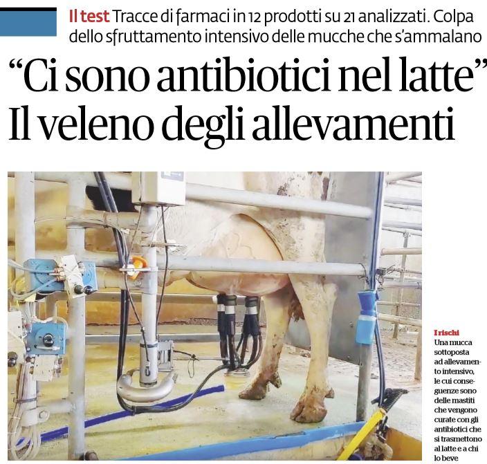 antibiotici nel latte salvagente