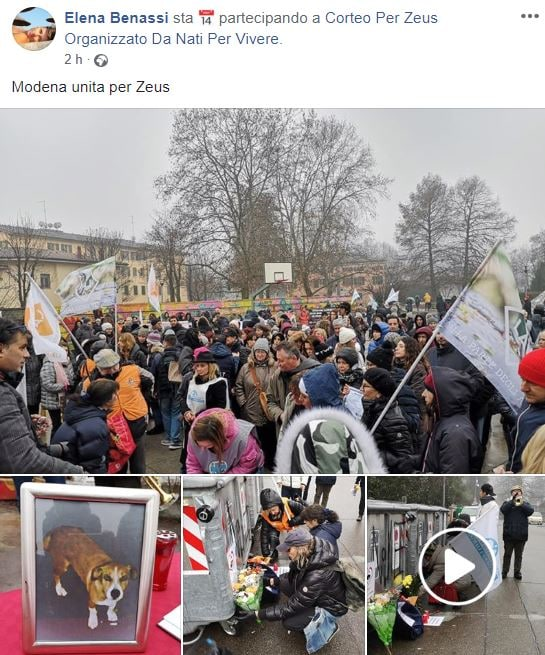 La manifestazione per il cane Zeus morto di botte a Modena