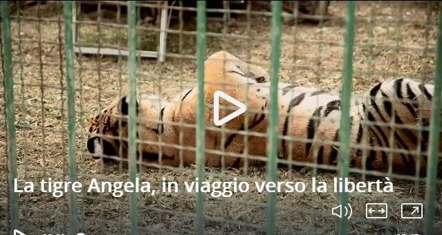 Perché chi è contro gli zoo ostacola la conservazione della