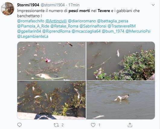 I pesci morti nel fiume Tevere