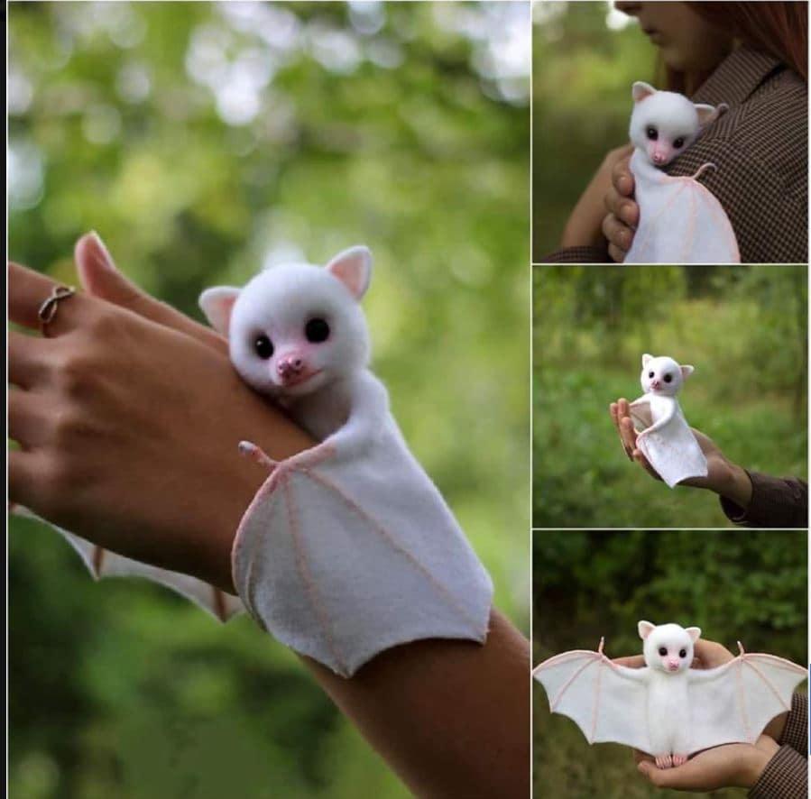 pipistrello bianco