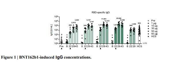 bnt162b1 vaccino covid pfizer biotech