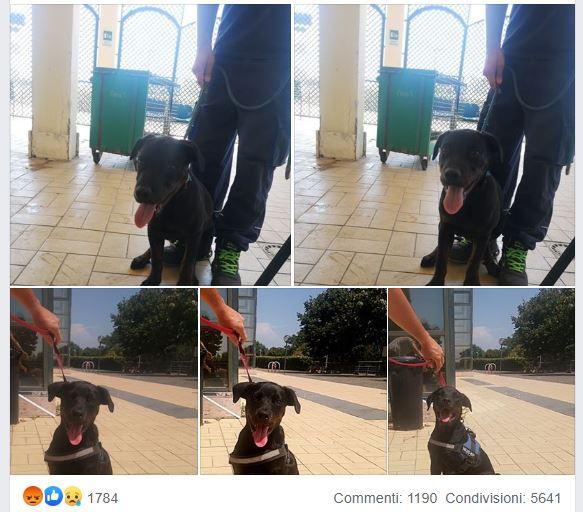 cucciolo lanciato canile muratella