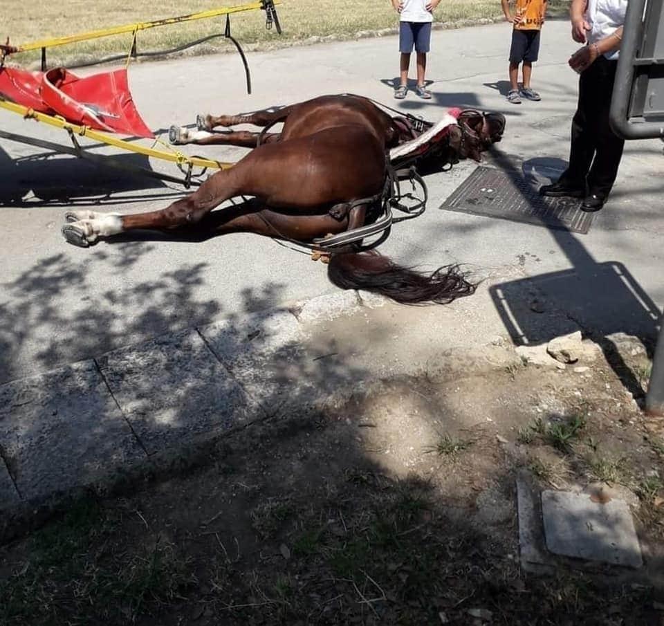 reggia CASERTA CAvallo stramazza al suolo (2)