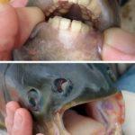 I denti più strani del mondo