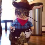 gatti halloween (11)
