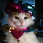 gatti halloween (13)