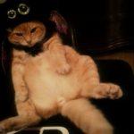 gatti halloween (15)
